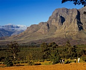 Vineyards of Delaire Winery, Stellenbosch, S. Africa