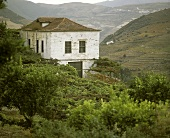Taylors Fladgate & Yeatman vineyard and house, Portugal