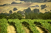 Vineyards and hilly landscape, Napa Valley, California