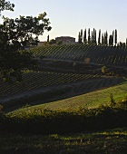 Avignonesi Estate, vineyards and cypresses in front, Chianti