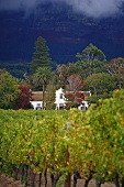 The renowned Buitenverwachting Winery, Constantia, S. Africa