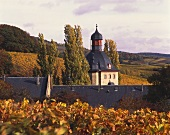 Vollrads Castle surrounded by autumnal vineyards, Rheingau