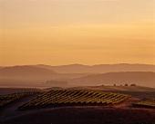 Twilight over Robert Mondavi's vineyards, Carneros, USA