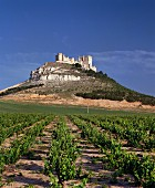 Penafiel Castle surrounded by its vineyards, Ribera del Duero