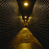 Cava sparkling wine stored in wine cellar, Spain