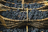Pinot noir grapes in wicker baskets, Burgundy, France