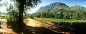 Thelema Mounton vineyards, Stellenbosch, S. Africa