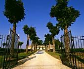 Allee führt zu einem Weinschloss in Bordeaux, Frankreich
