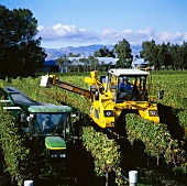 Machines make grape picking easier, Marlborough, New Zealand