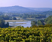 Vineyards on river Les Loges near Sancerre, Nievre, Loire