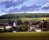 View over the vineyards of Aloxe-Corton, Cote d'Or, Beaune
