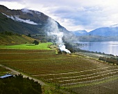 Rippon Vineyard in winter, Wanaka, Central Otago, N.Zealand