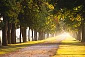 Avenue leading to famous Château Margaux, Bordeaux