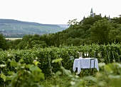 Table with champagne glasses in vineyard in Champagne