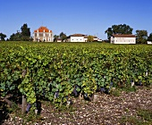 Château Haut-Bailly vor Weinberg, Gironde, Bordeaux