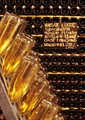 Sparkling wine bottles in pupitre, Cavalleri, Lombardy, Italy