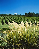 Coopers Creek Vineyard, Henderson, Auckland, N. Zealand