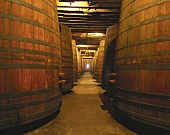 Wine cellar of family-run Viña Cousiño Macul, Chile