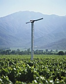 Wind machine for frost protection in vineyard, Casablanca, Chile