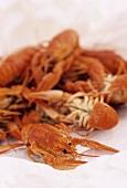 Australian freshwater crayfish (yabbies)