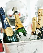 Champagne bottles on ice