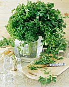 Flat-leaf and curled parsley, Hamburg parsley (root)