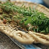 Salad burnet in a basket