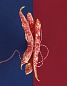 Three borlotti beans tied together with string