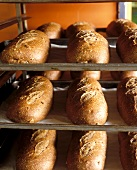 Freshly baked mixed-grain loaves in rack at baker's