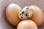 Three hen's eggs and a quail's egg
