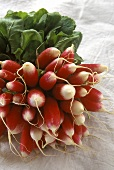 A Bunch of Fresh Radishes