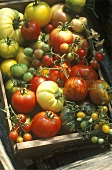 Lots of different varieties of tomatoes in a crate