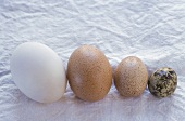 Still life with eggs (l-r: duck, hen, guinea-fowl, quail)