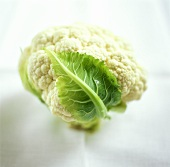 Young cauliflower with leaf