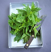 Bunch of freshly-cut mint in a zinc bowl with knife