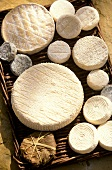 Several goat's cheeses from Provence on a wicker tray