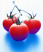 Three tomatoes on the vine