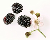 Three blackberries and a blackberry flower