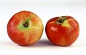 Two Gerlinde apples