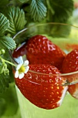 Fresh strawberries in a glass of punch (close-up)
