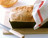 Home-made white sandwich loaf in a loaf tin
