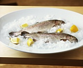 Two salmon trout with lemon and ice on white platter