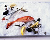 Still life with fish and shells on crushed ice