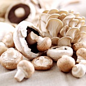 Still life with button mushrooms and oyster mushrooms