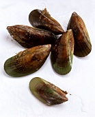 Green mussels from New Zealand