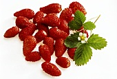 A few wild strawberries, strawberry leaf and flower