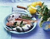 Still life with red mullet, gilthead bream, herbs and lemon