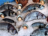 Sea bream and mussels on ice in a counter