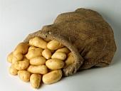 Jute sack of potatoes