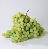 Italian seedless green table grapes